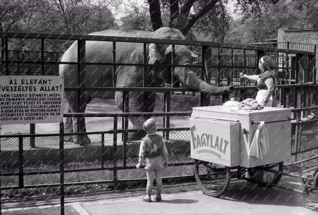 Időjárás - Kánikula az állatkertben