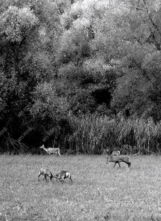 Vadászat - Szarvasvadászat a gemenci erdőben