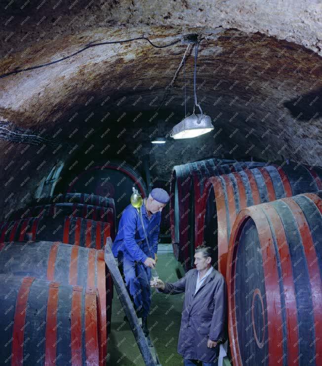 Mezőgazdaság - Borászat - Lopóval egy csopaki pincében