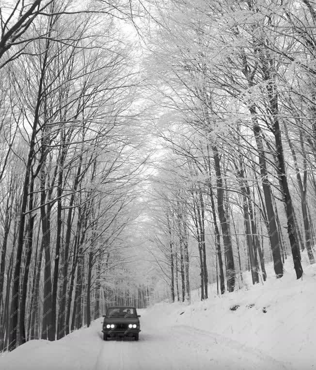 Természet - Téli képek - Mátra