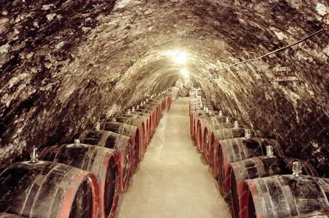 Mezőgazdaság - Tokaj-hegyaljai Állami Gazdasági Borkombinát borospincéje