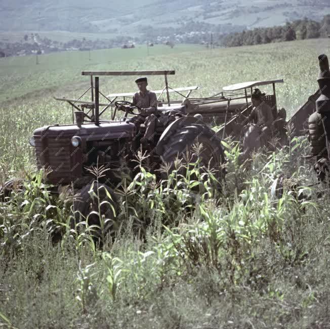 Mezőgazdaság - Őszi mezőgazdasági munkák Nagydorogon