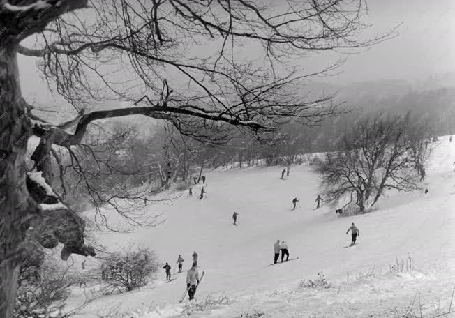 Szabadidő - Sport - Síelők a Szabadság-hegyen
