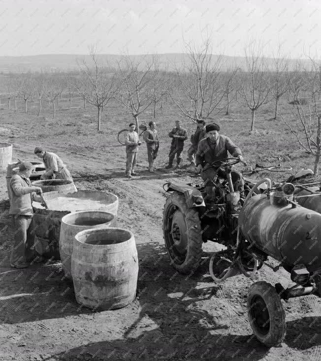 Mezőgazdaság - Balatonboglári ÁG