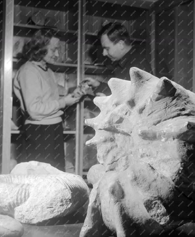 Kultúra - A Magyar Nemzeti Múzeum felújított részlege