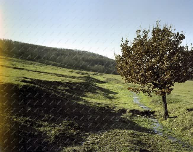 Természet - Tájkép