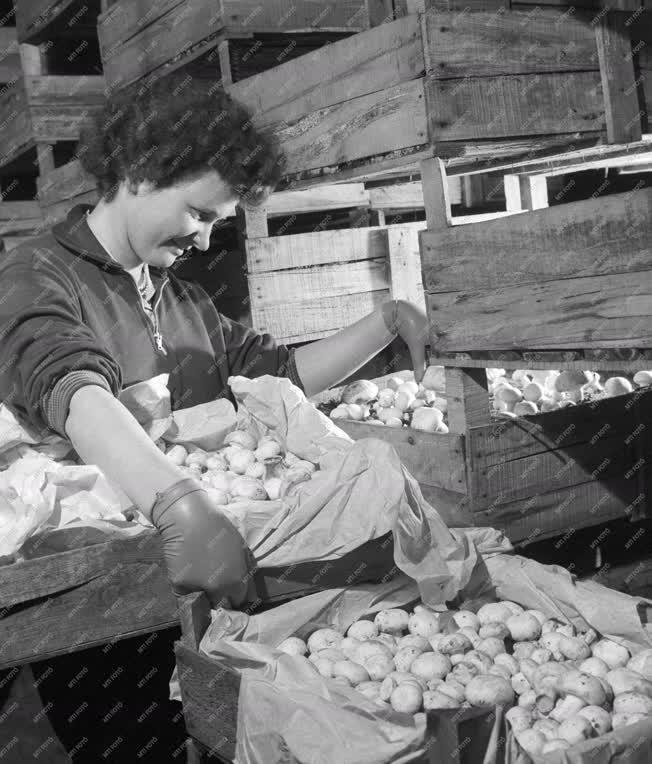 Mezőgazdaság - A Helvéciai Állami Gazdaság