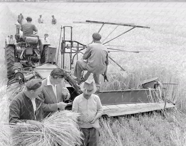 Mezőgazdaság - Aratják a gabonát Szászbereknél