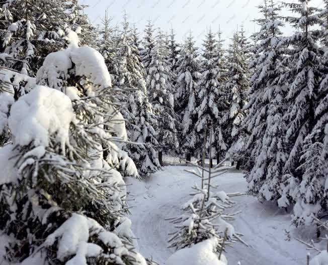 Természet - A téli Mátra