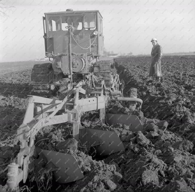 Mezőgazdaság - A tiszaföldvári Lenin Tsz