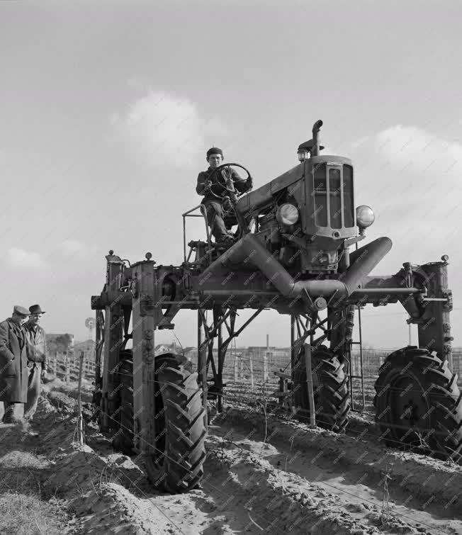Mezőgazdaság - Szőlőtermesztés - Tavaszi munkák