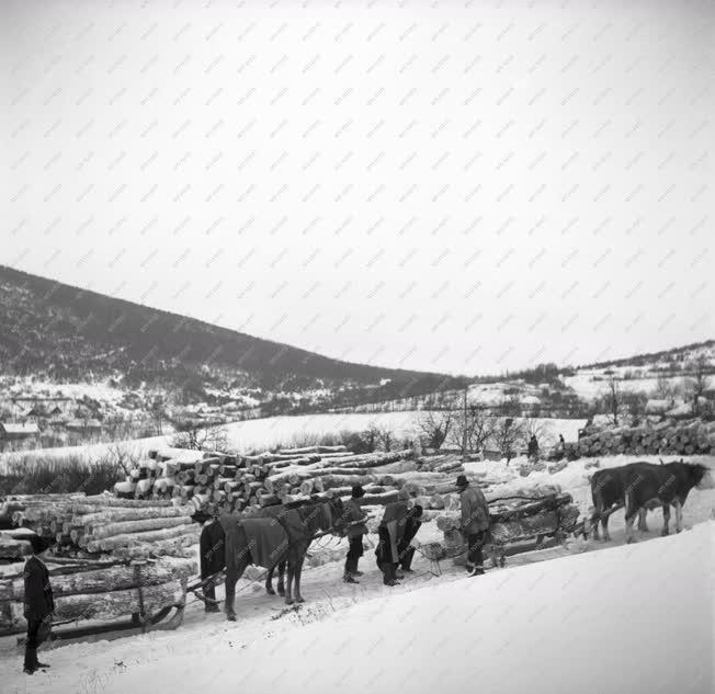 Mezőgazdaság - Erdőgazdaság - Fakitermelés a Pilisben