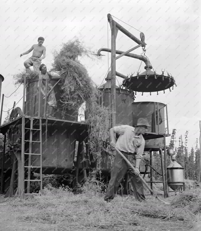 Ipar - Vegyipar - Kapor vegyipari lepárlása