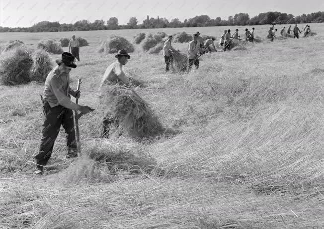 Mezőgazdaság - Aratás a szajoli Vörös Csepel Tsz-ben
