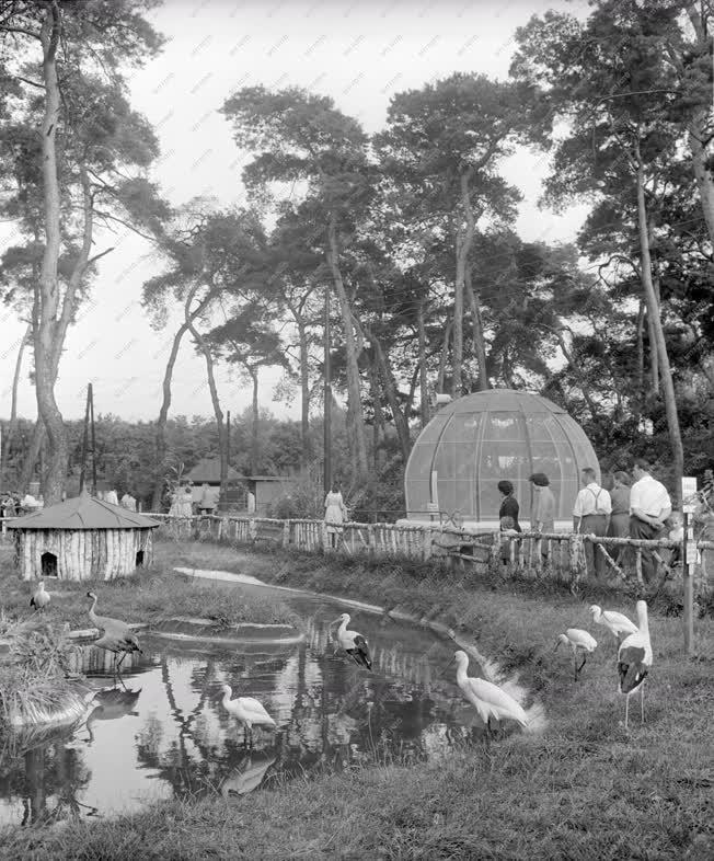 Természet - A Nagyerdei Állatkert