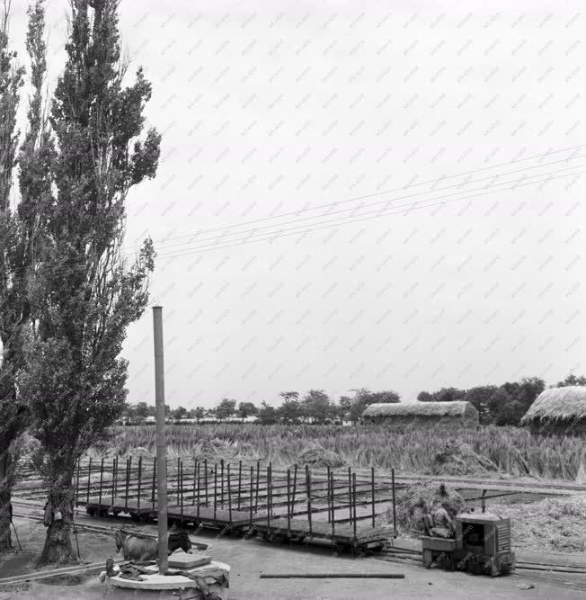 Mezőgazdaság - Betakarítás Apajon