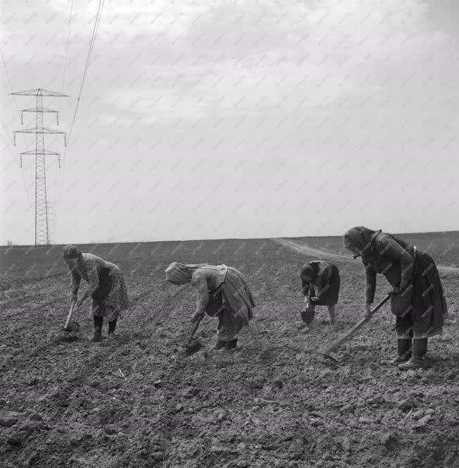 Mezőgazdaság - Kukoricát vetnek a Gerő Ernő Tsz-ben