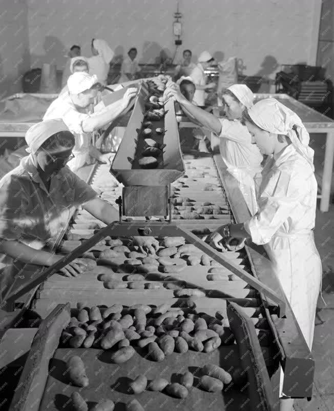 Kereskedelem - Krumpli feldolgozás a Nagyvásártelepen