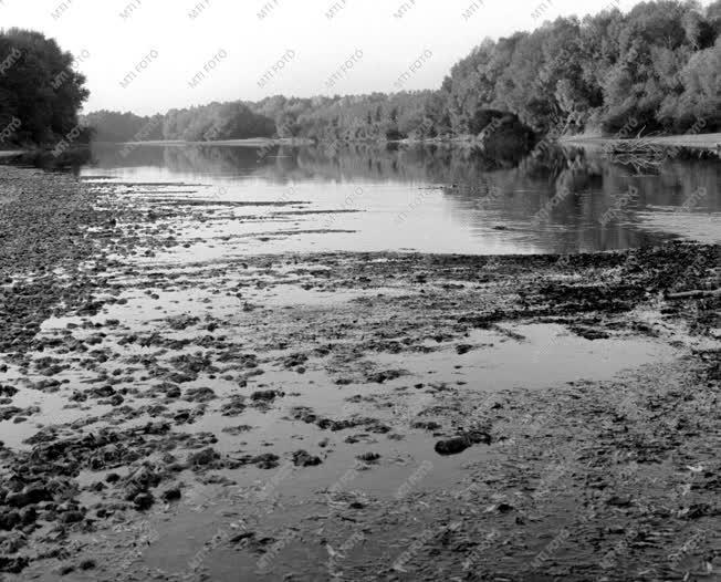 Természet - A mosoni Duna ősszel