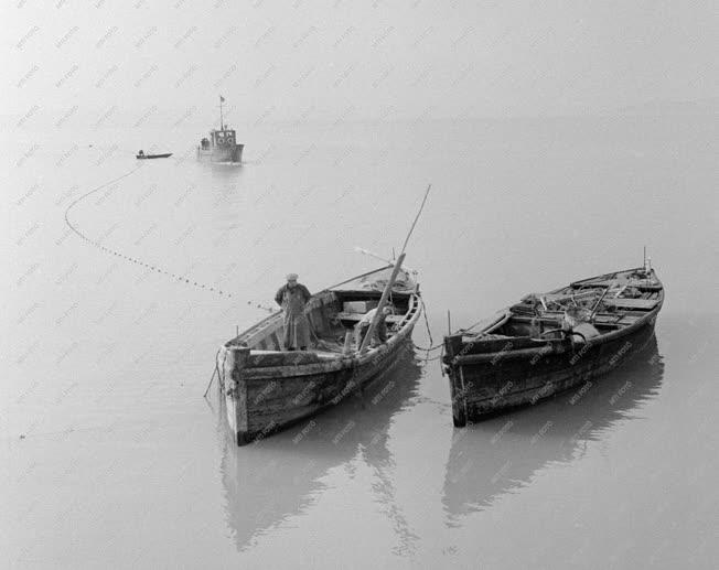 Mezőgazdaság - Balatoni halászat