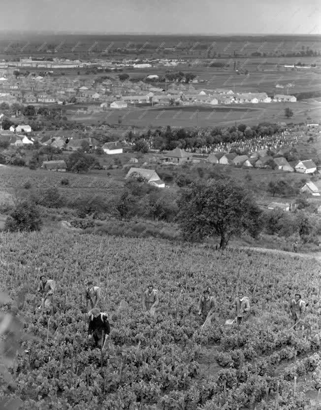 Mezőgazdaság - Szőlészet - Permetezés