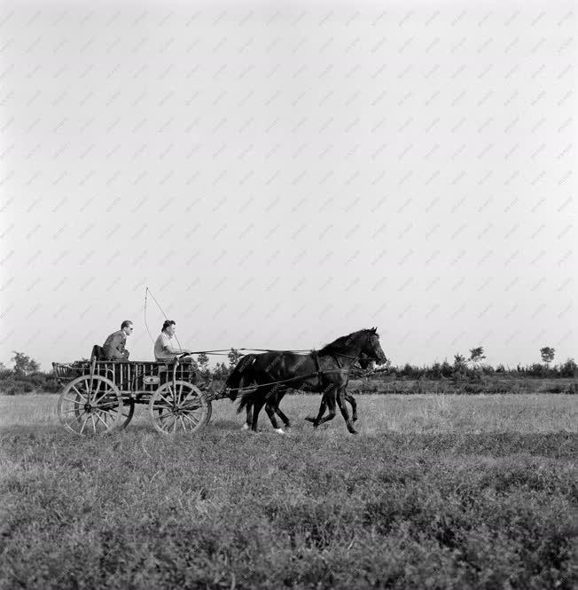 Mezőgazdaság - A csongrádi Haladás Tsz