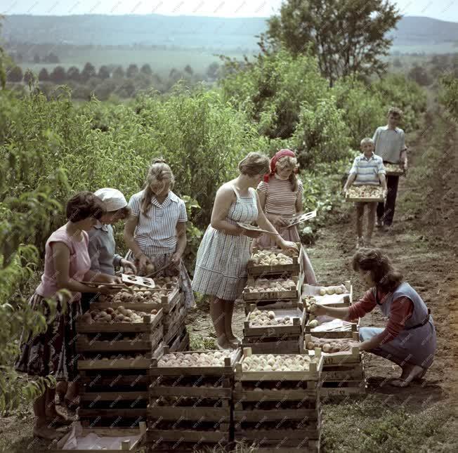 Növénytermesztés - Március 15. Termelőszövetkezet