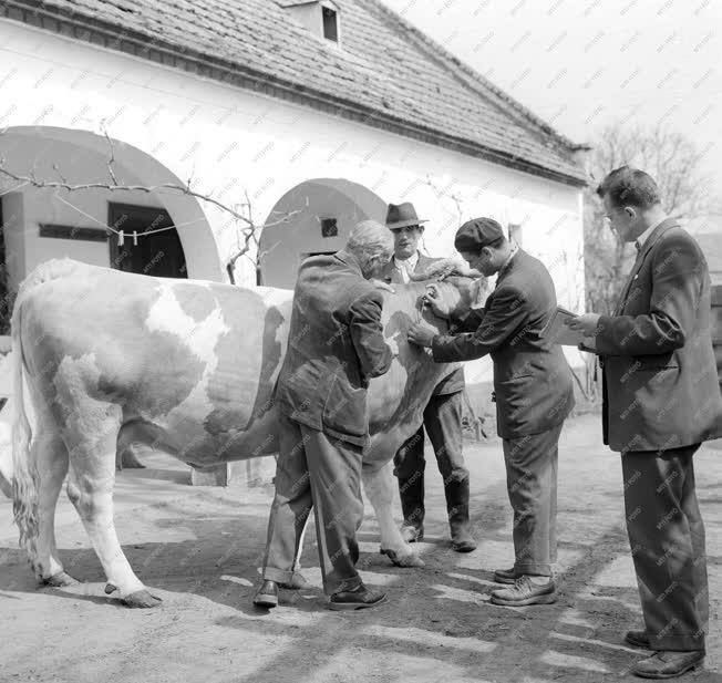 Mezőgazdaság - Állategészségügyi felmérés