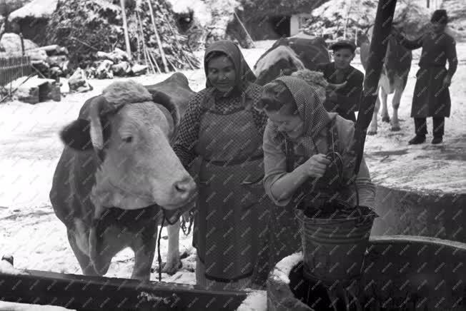 Mezőgazdaság - Állattenyésztés