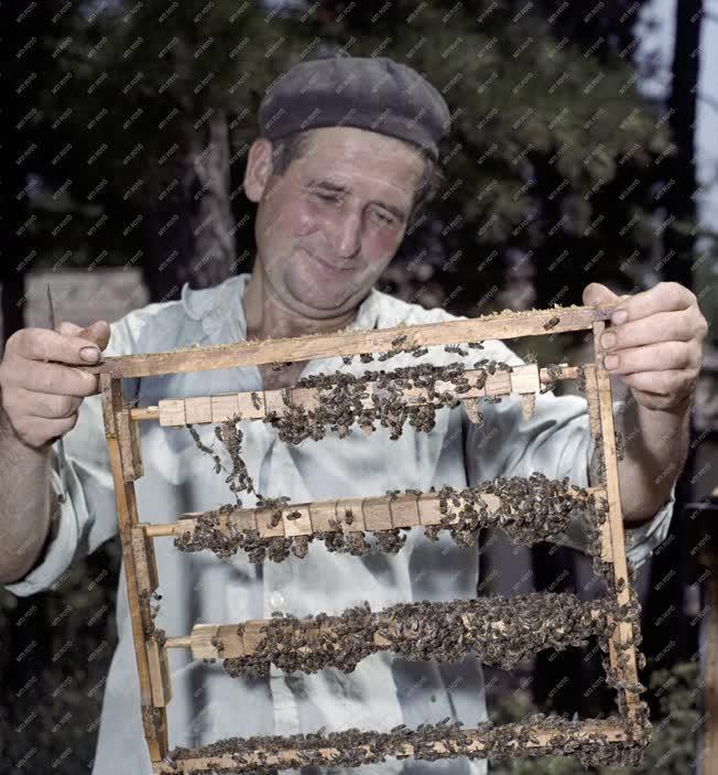 Mezőgazdaság - Gödöllői Kisállattenyésztési Kutató Intézet leányfalui méhészete