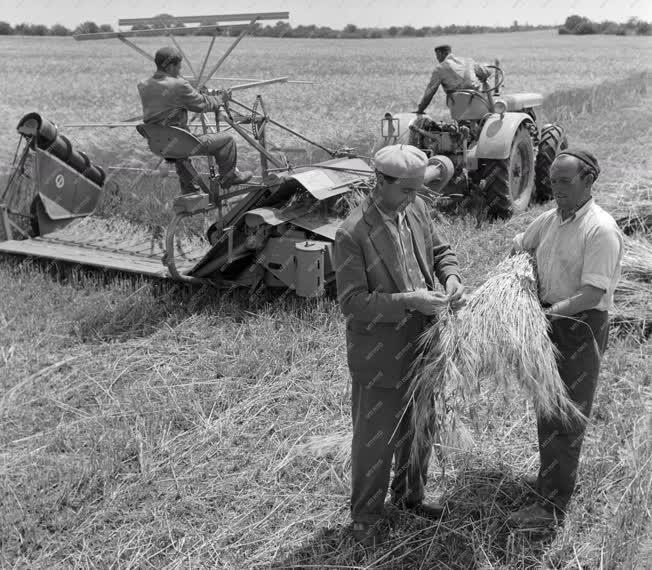 Mezőgazdaság - Megkezdték az aratást Bács megyében
