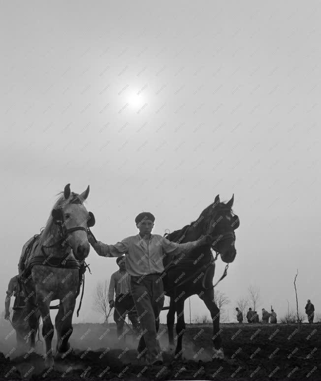 Mezőgazdaság - Versenyre hívnak a tataházai Petőfi Tsz KISZ fiataljai