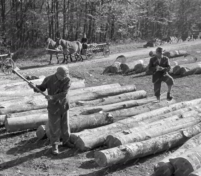 Erdőgazdálkodás - Fakitermelés
