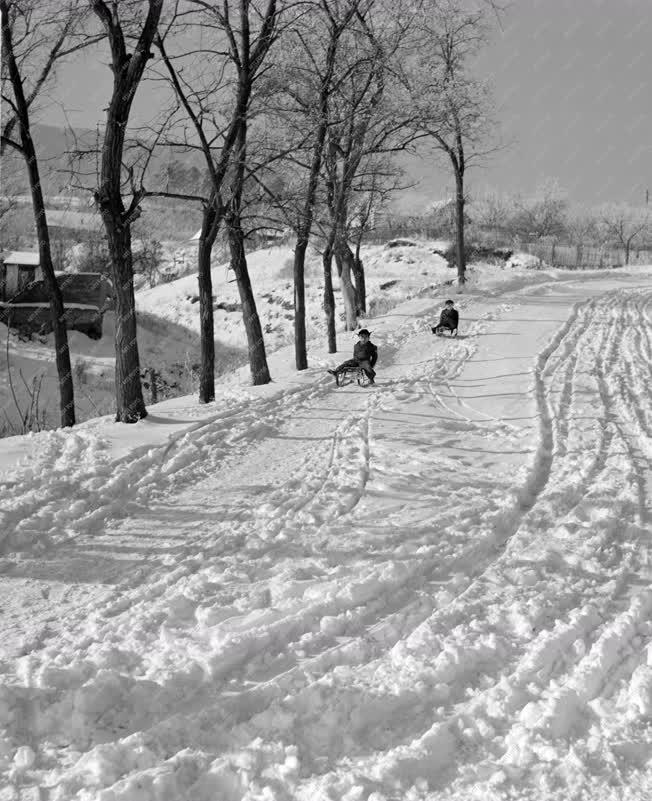 Természet-környezet - Szánkózó gyerekek Dunabogdányban