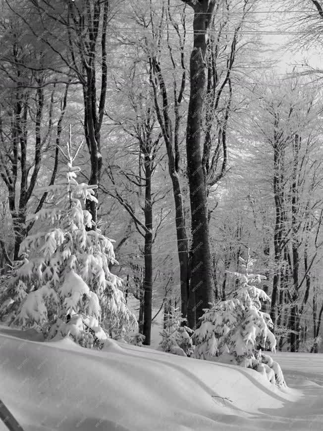Természet - Kékestető télen