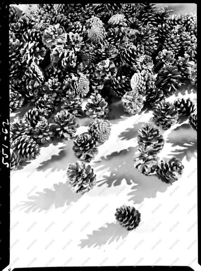 Természet - Fenyőtobozok - Agrimpex album