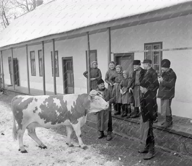 Mezőgazdaság - Palágyi Ferenc legjobb tehenével