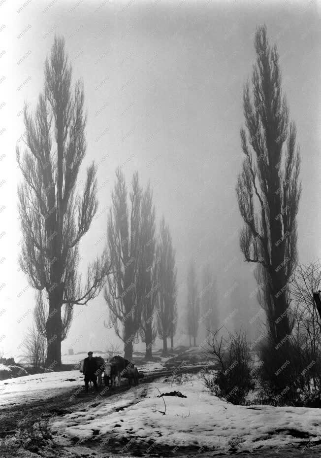 Tájkép - Tél Zalában