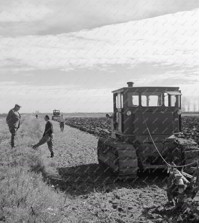 Mezőgazdaság - A Közép-tiszai Állami gazdaság rizsföldje