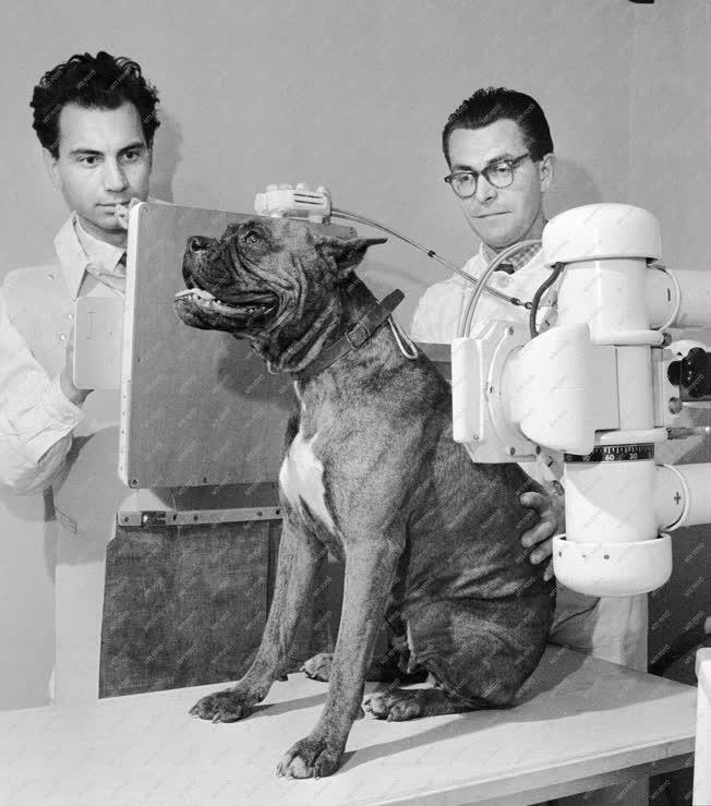 Állategészségügy - Az I. sz. Állatkórház új röntgengépe