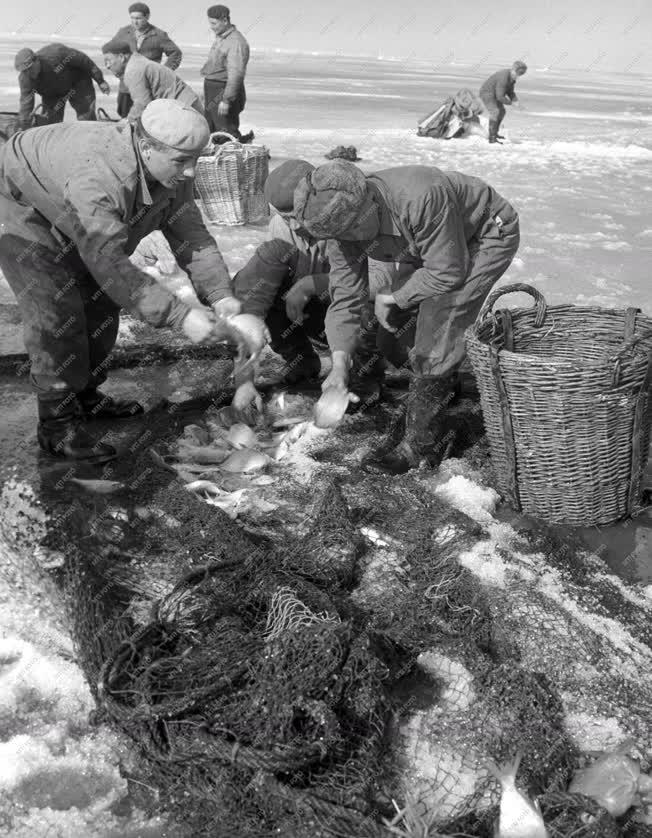 Mezőgazdaság - Jég alatti halászat a Balatonon