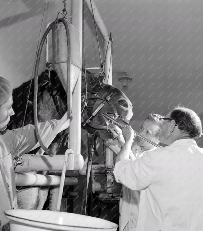 Mezőgazdaság - Lófogászat a kaposvári állatkórházban