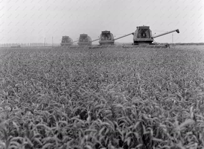 Mezőgazdaság - Aratnak a kombájnok Nádudvaron