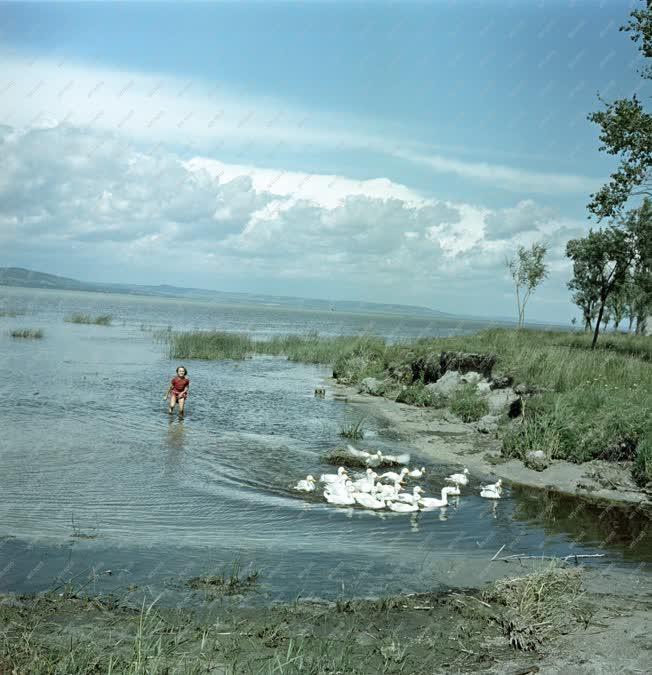 Életkép - Balatoni képek