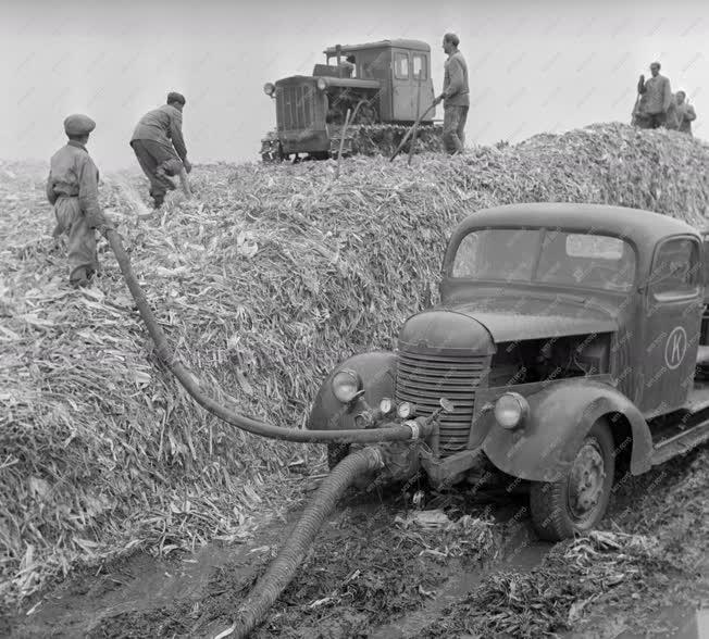 Mezőgazdaság - Kukoricabetakarítás