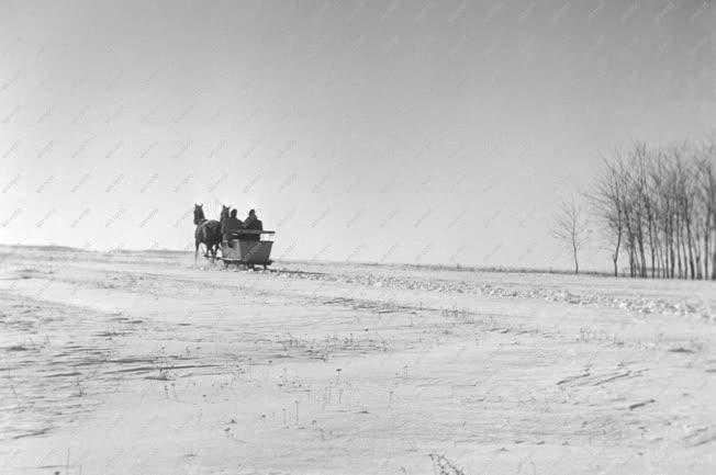Mezőgazdaság - Téli puszta