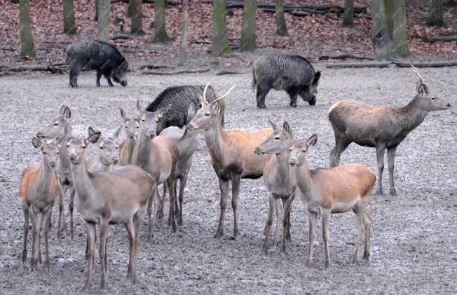 Természet - Nógrád - Vadaspark