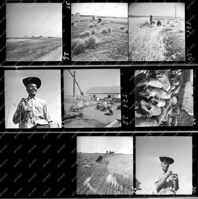 Hungarikum - Mezőgazdaság - Hortobágy album