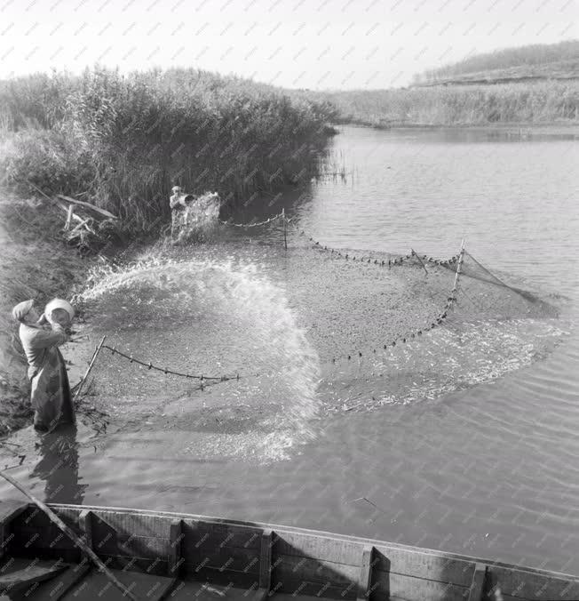 Halászat - Haltenyésztés