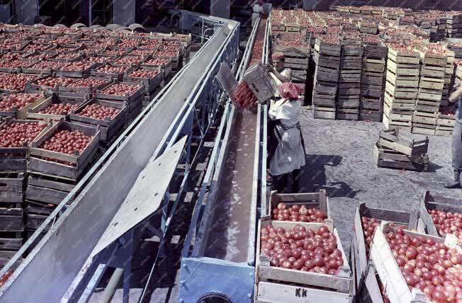 Élelmiszeripar - Kecskeméti Konzervgyár